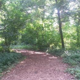 Wald Maxipark
