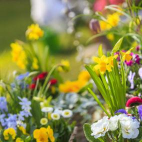 Frühjahrsmarkt wird verschoben | Ersatztermin steht noch nicht fest
